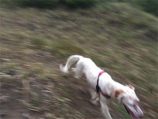 f:id:dog99line:20161102232350j:image