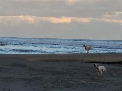 f:id:dog99line:20161229212821j:image