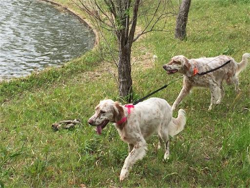 f:id:dog99line:20170501220531j:image