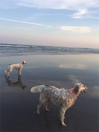 f:id:dog99line:20170521221816j:image