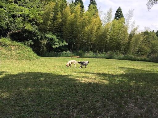 f:id:dog99line:20170531225423j:image