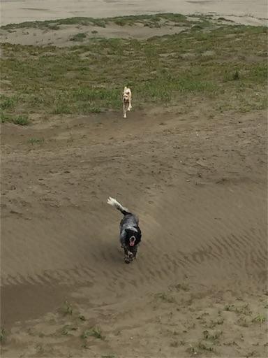 f:id:dog99line:20170622212921j:image
