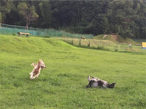f:id:dog99line:20170905210912j:image
