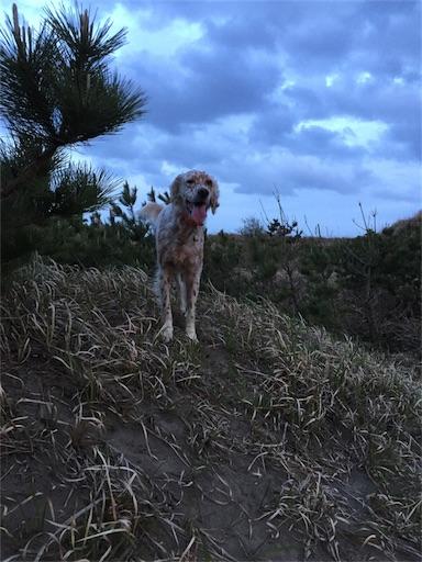 f:id:dog99line:20180412000931j:image