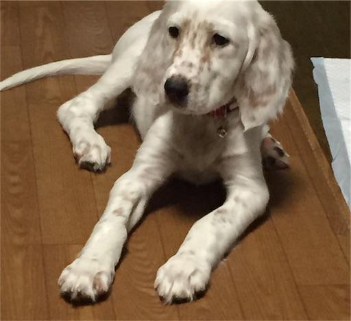 f:id:dog99line:20180807132844j:image