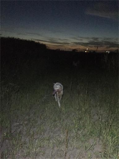 f:id:dog99line:20180827150520j:image