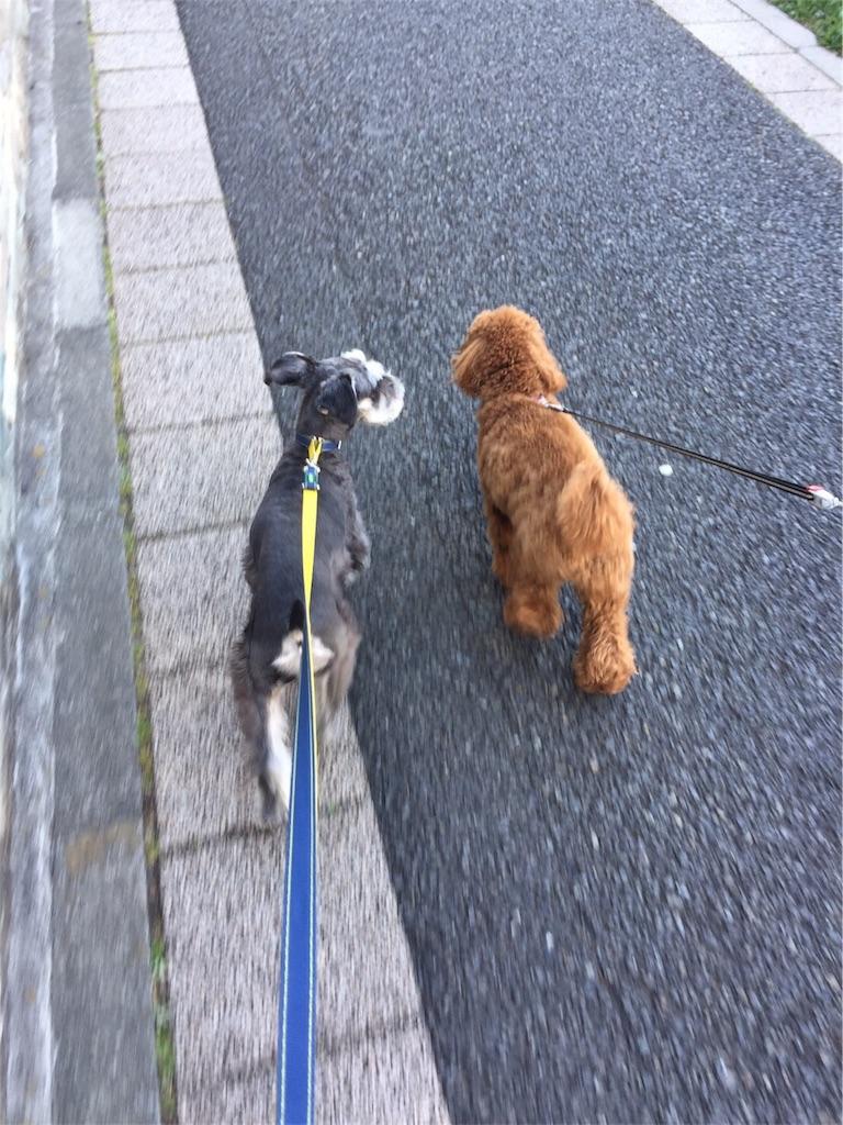 f:id:dog_hokulani:20170301000752j:image
