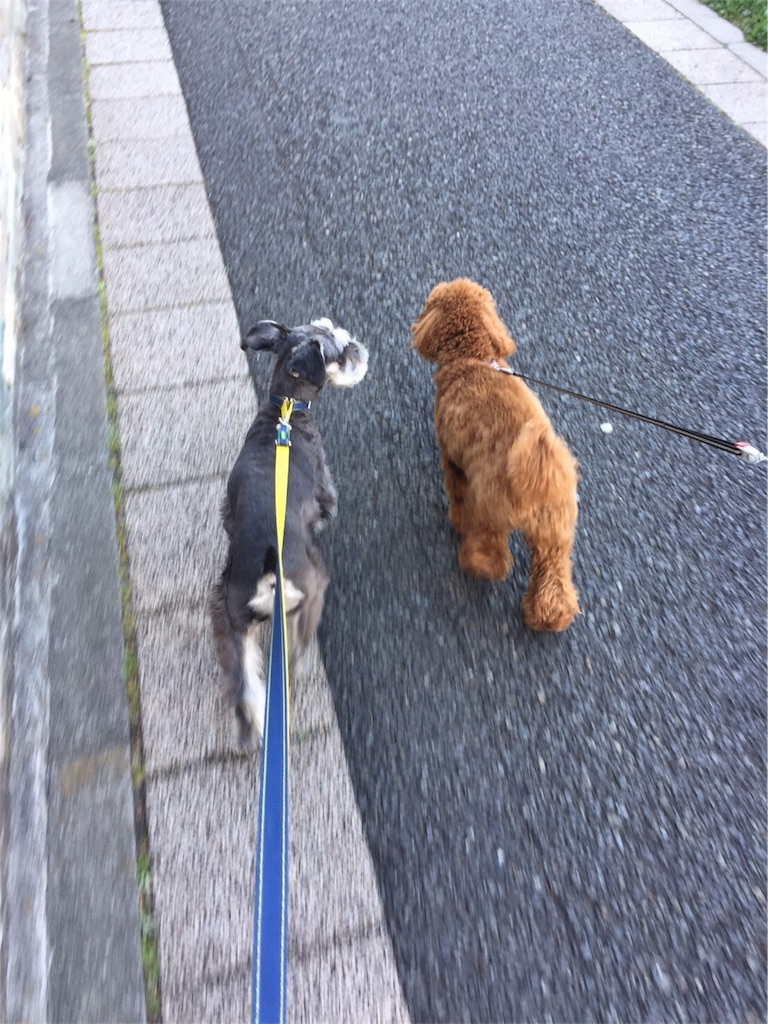 f:id:dog_hokulani:20170302084701j:image