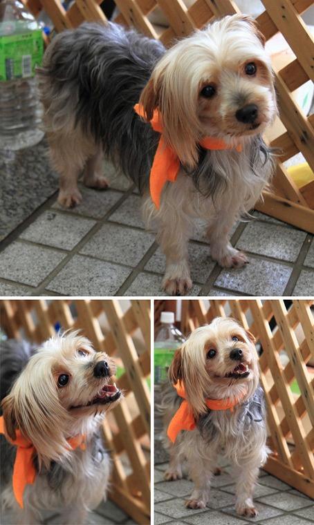 f:id:dog_life_saving:20120206152734j:image