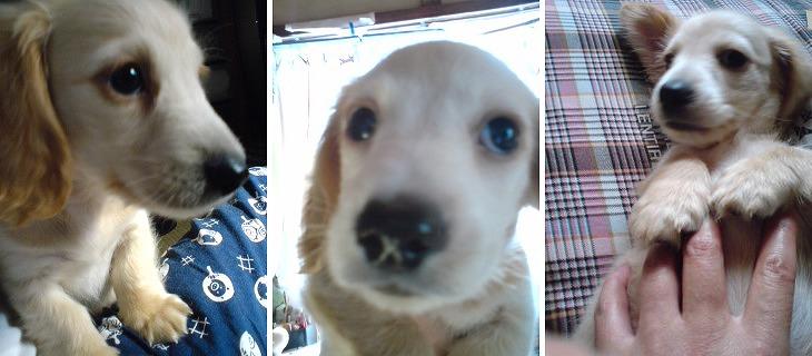 f:id:dog_life_saving:20120206152740j:image