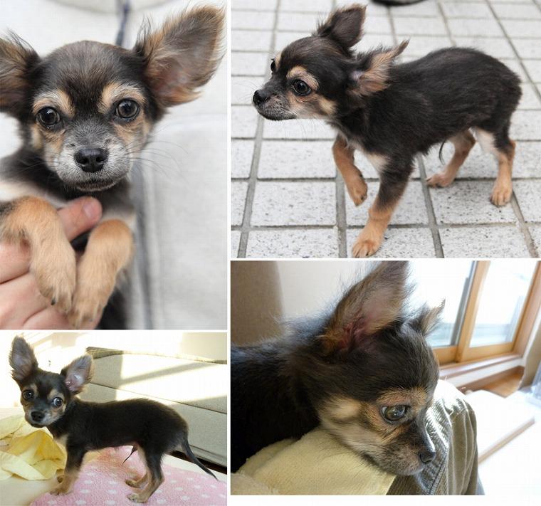 f:id:dog_life_saving:20120206152743j:image