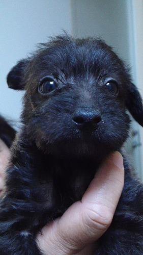f:id:dog_life_saving:20120206152746j:image