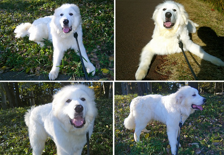 f:id:dog_life_saving:20120206152747j:image