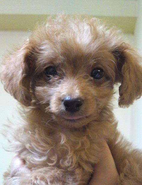 f:id:dog_life_saving:20120206152750j:image