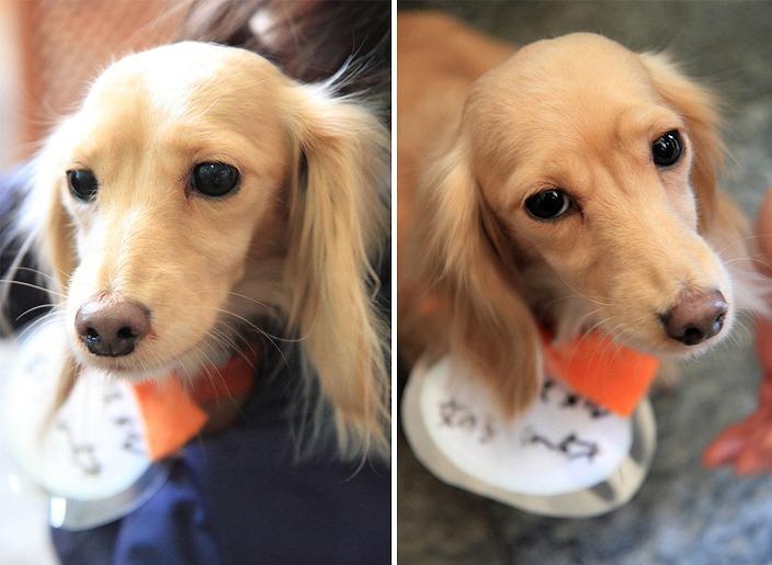 f:id:dog_life_saving:20120206152752j:image
