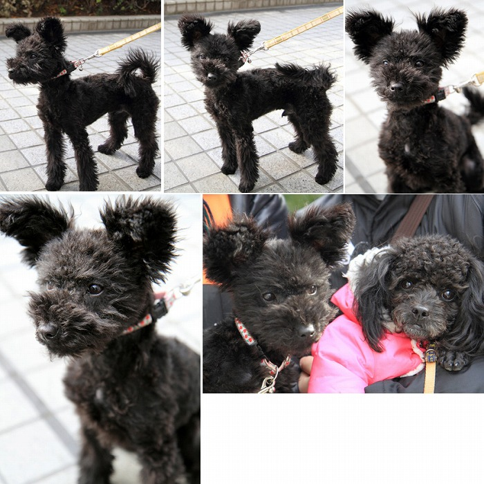 f:id:dog_life_saving:20120213153943j:image