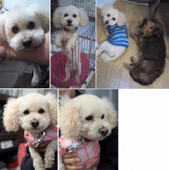 f:id:dog_life_saving:20120213154259j:image
