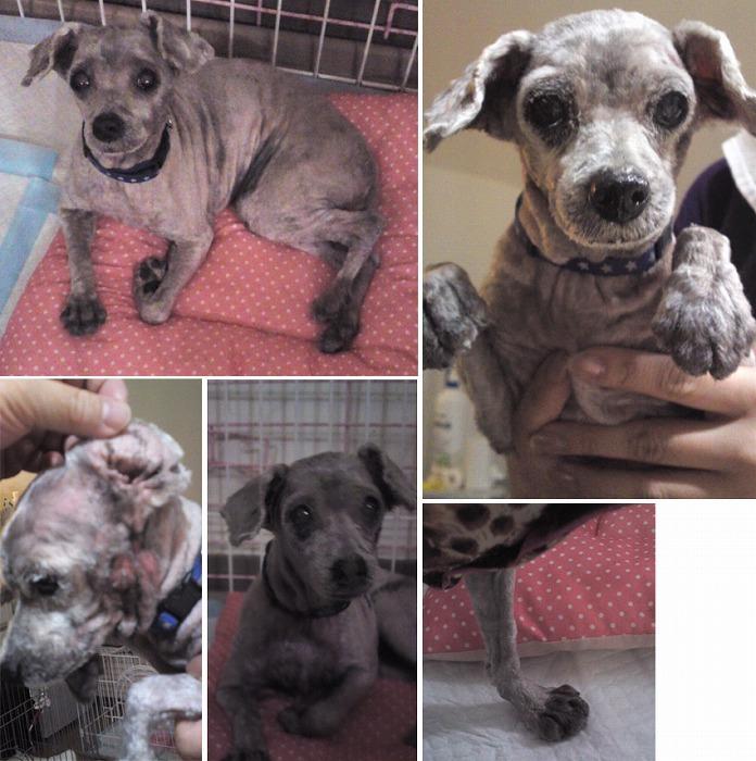 f:id:dog_life_saving:20120213160022j:image
