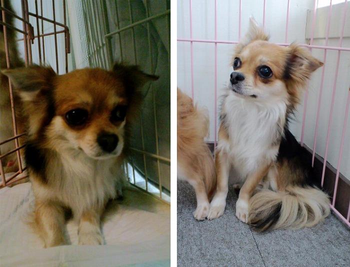 f:id:dog_life_saving:20120213160024j:image