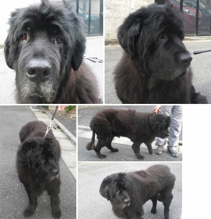 f:id:dog_life_saving:20120213162546j:image