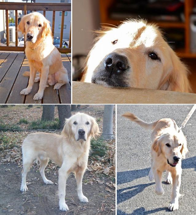 f:id:dog_life_saving:20120213162552j:image
