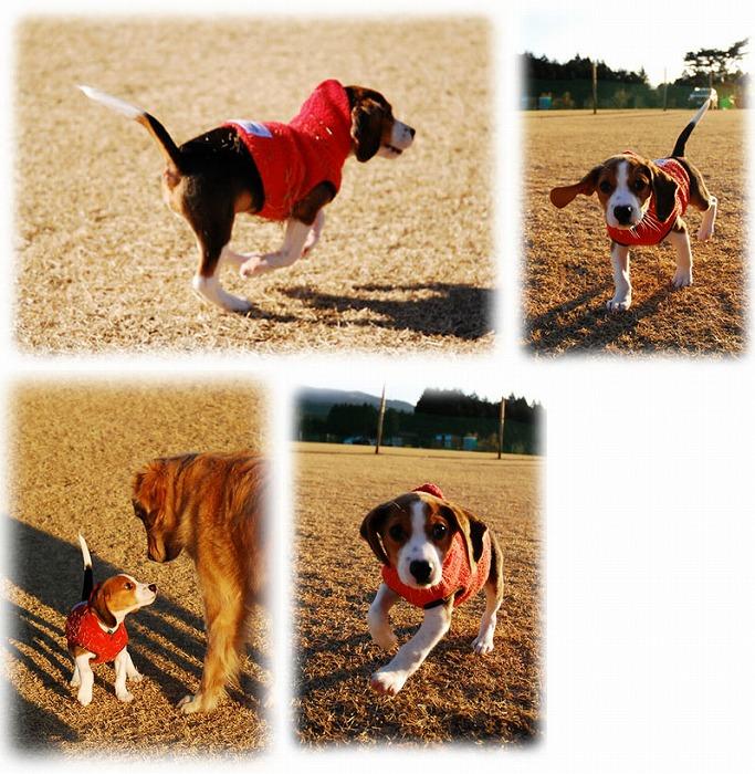 f:id:dog_life_saving:20120213162554j:image