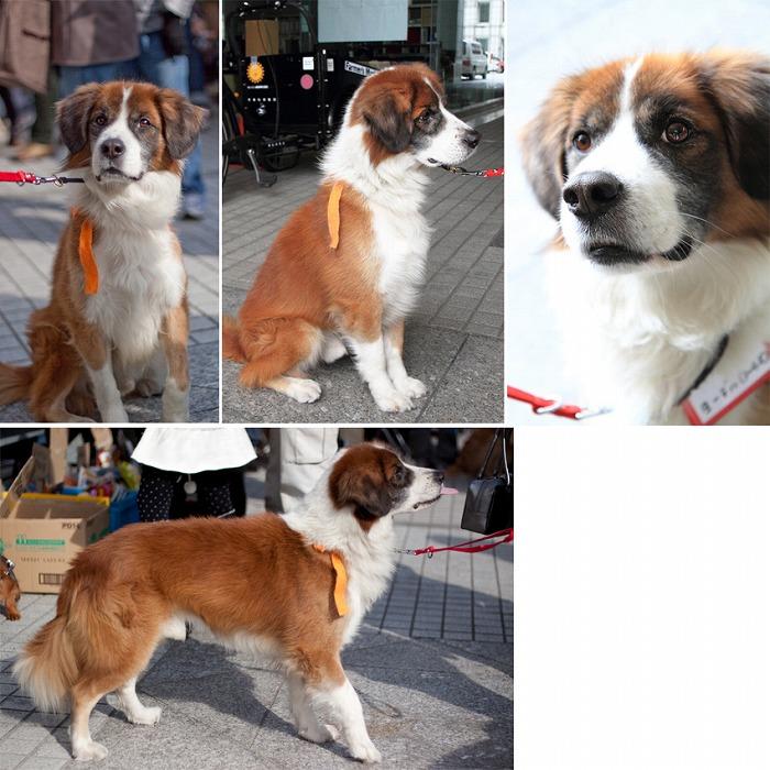 f:id:dog_life_saving:20120213162555j:image