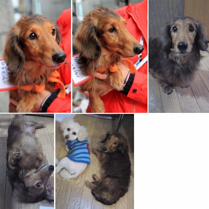 f:id:dog_life_saving:20120213162557j:image