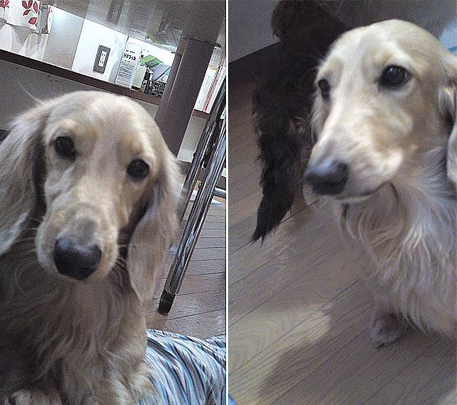 f:id:dog_life_saving:20120213162558j:image
