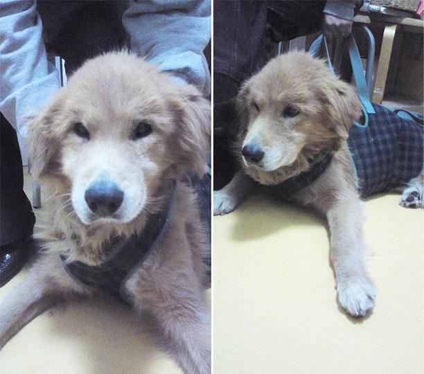 f:id:dog_life_saving:20120213170738j:image