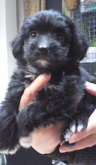 f:id:dog_life_saving:20120228175603j:image