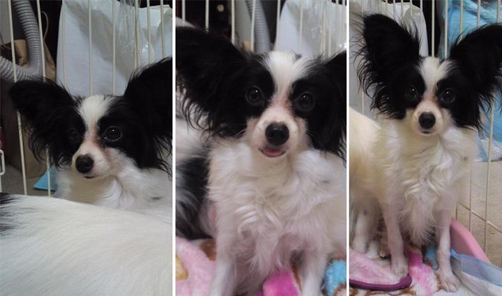 f:id:dog_life_saving:20120313135742j:image