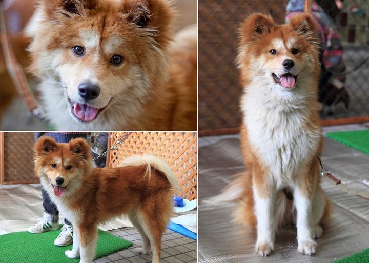 f:id:dog_life_saving:20120313135743j:image