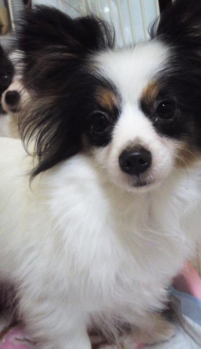 f:id:dog_life_saving:20120313135746j:image