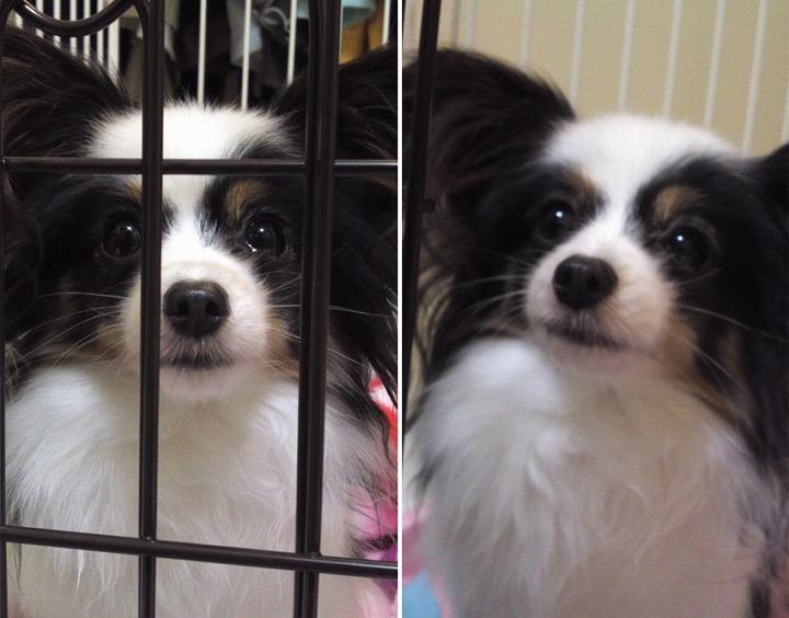 f:id:dog_life_saving:20120313135747j:image
