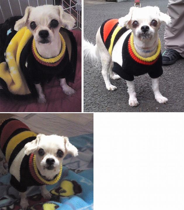 f:id:dog_life_saving:20120313135748j:image