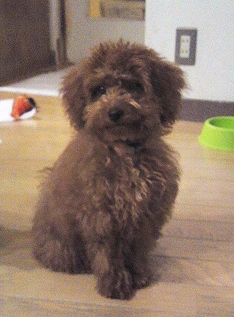 f:id:dog_life_saving:20120313135749j:image