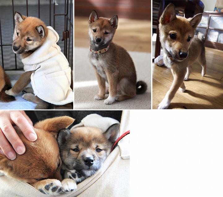 f:id:dog_life_saving:20120313135750j:image