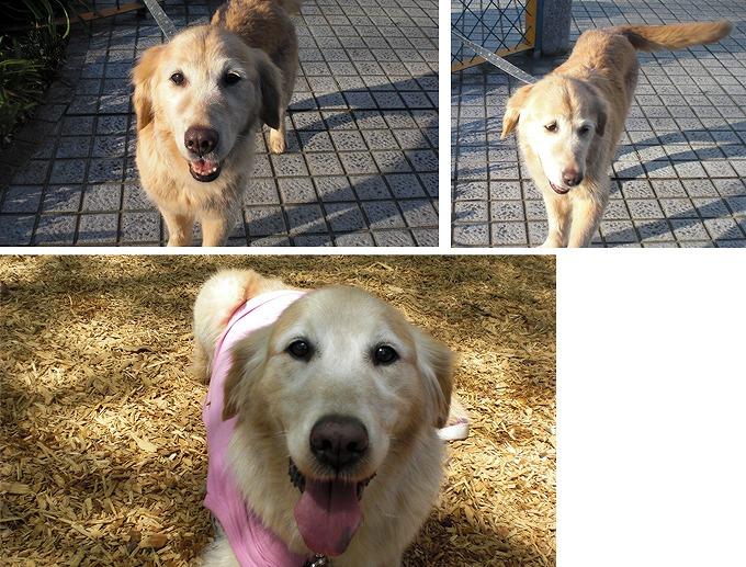 f:id:dog_life_saving:20120313143031j:image