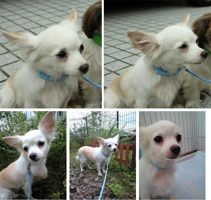 f:id:dog_life_saving:20120313143033j:image
