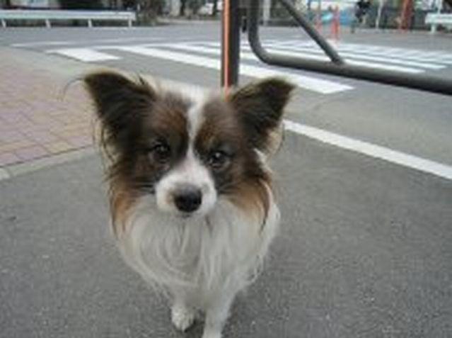 f:id:dog_life_saving:20120317195730j:image