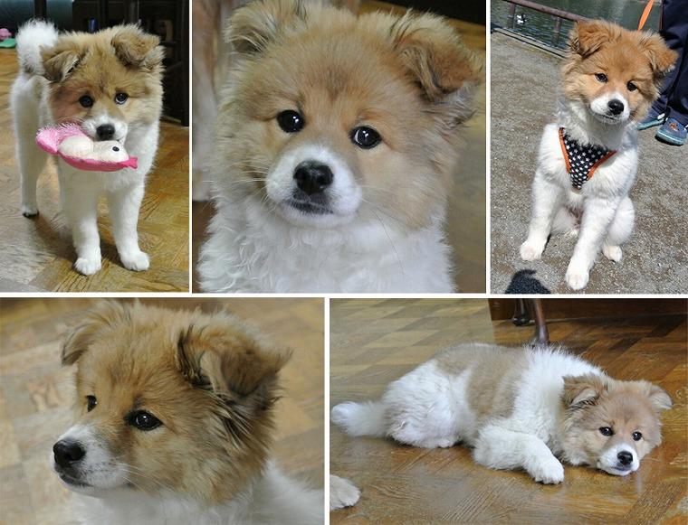 f:id:dog_life_saving:20120815164427j:image