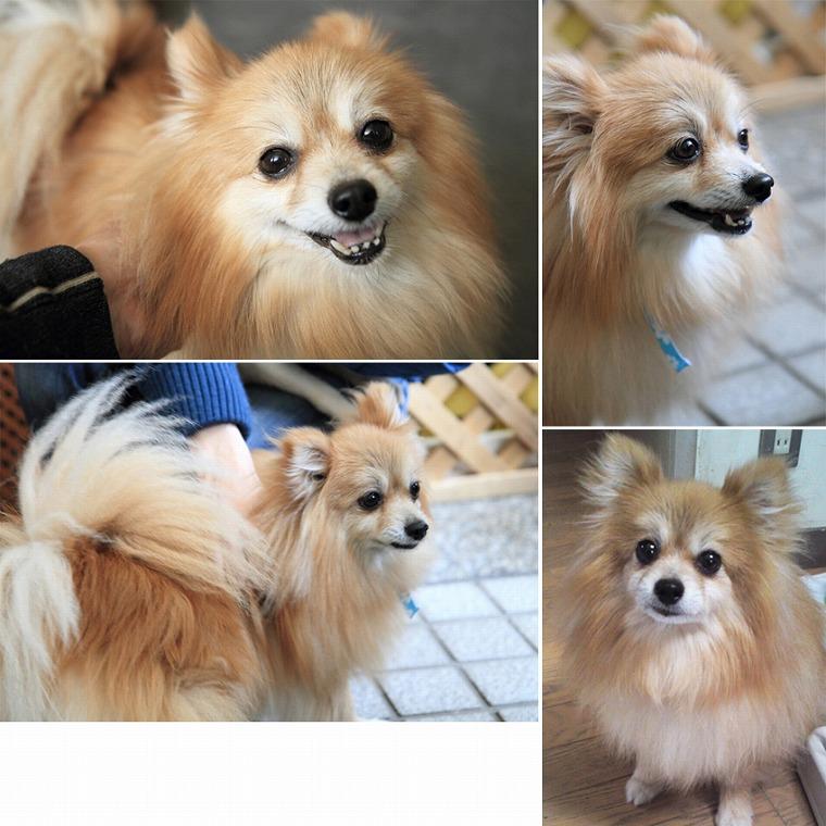f:id:dog_life_saving:20120815164434j:image