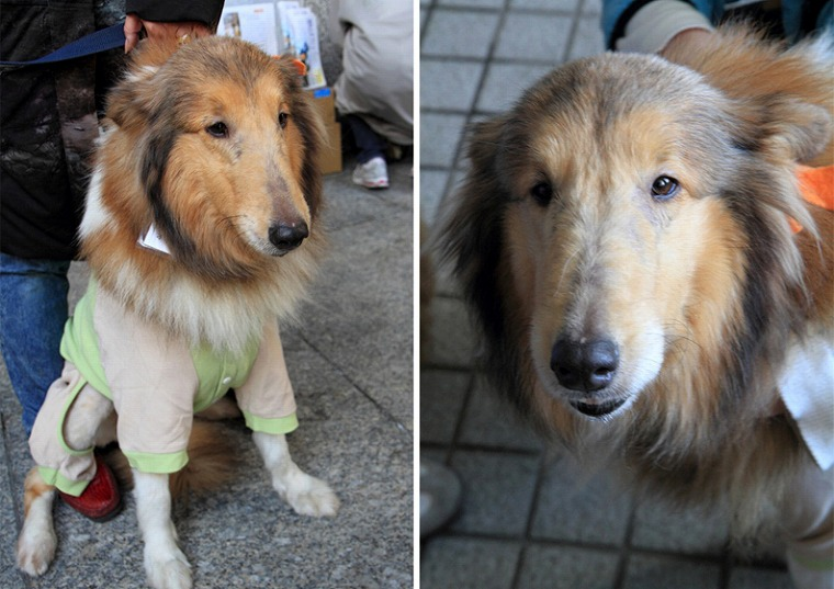 f:id:dog_life_saving:20120815164435j:image