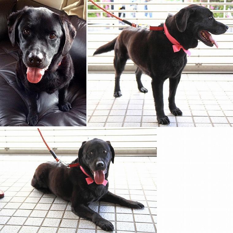 f:id:dog_life_saving:20120815164436j:image
