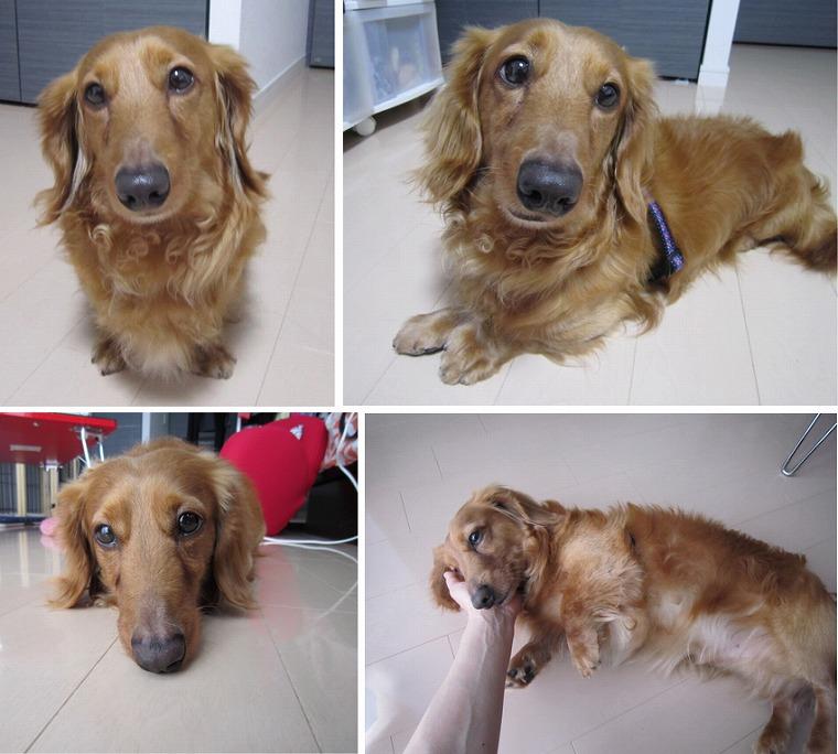 f:id:dog_life_saving:20120815164438j:image