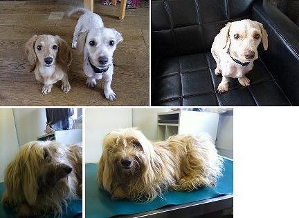 f:id:dog_life_saving:20120816144425j:image