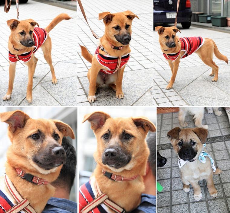 f:id:dog_life_saving:20120816144427j:image