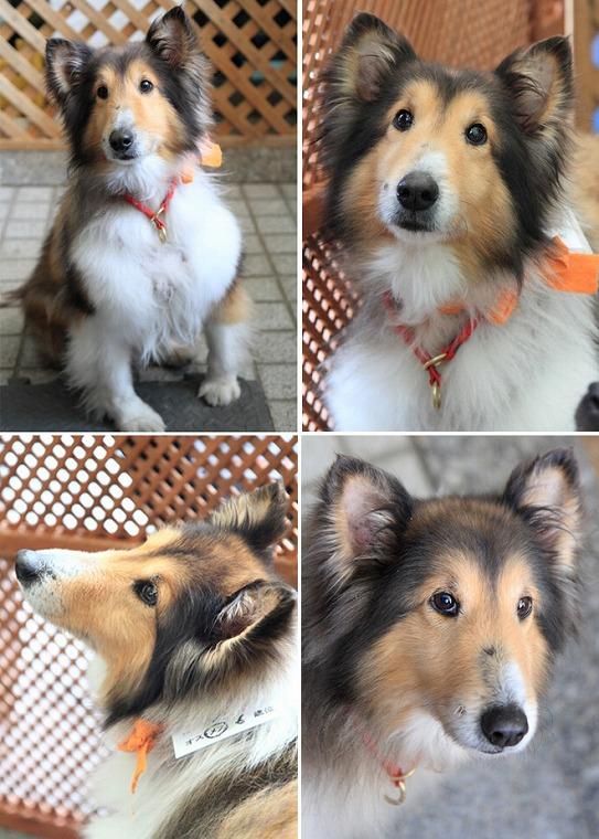 f:id:dog_life_saving:20120816144429j:image