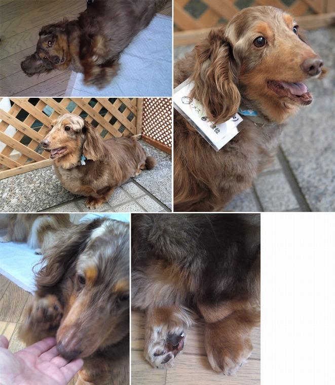 f:id:dog_life_saving:20120816144430j:image